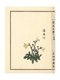 Tsusensou or Creeping Mazus, Mazus Miquelii Giclee Print by Bairei Kono