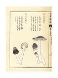 Shimoshimeji Mushrooms Giclee Print by Kan'en Iwasaki