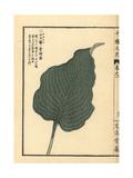 Plantain Lily Leaf, Hosta Montana Giclee Print by Bairei Kono