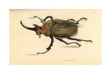 Dung Beetle, Megasoma Elephas Giclee Print by Frederick Nodder