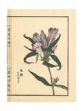 Rindou or Japanese Gentian, Gentiana Scabra Giclee Print by Bairei Kono