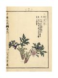 Eizan Violet, Viola Eizanensis Giclee Print by Bairei Kono