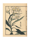Kyouchikutou or Oleander Flower, Nerium Oleander Var Indicum Giclee Print by Bairei Kono