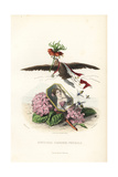 Emblematic Illustration of Hortensia and Crown Imperial Flowers Giclee Print by Jean Ignace Grandville