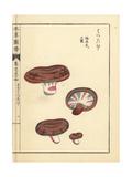 Hatsudake Mushroom, Lactarius Hatsudake Tanaka Giclee Print by Kan'en Iwasaki