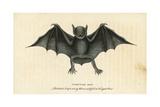 Greater Bulldog Bat, Noctilio Leporinus Giclee Print