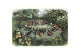 An Elf Teaching a Choir of Birds to Sing Giclee Print by Richard Doyle