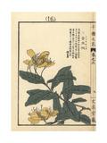Chinese St John's Wort, Hypericum Monogynum Giclee Print by Bairei Kono