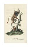 Siau Island Tarsier, Tarsius Tumpara Giclee Print