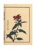 Vervain, Verbena Officinalis Giclee Print by Bairei Kono