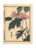Japanese Anemone, Anemone Hupehensis Var Japonica Giclee Print by Bairei Kono