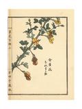 Muresuzume or Chinese Caragana, Caragana Sinica Giclee Print by Bairei Kono