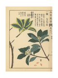 Indian Paper Plant or Lokta and Winter Daphne Giclee Print by Kan'en Iwasaki