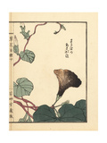 Asagao or Morning Glory, Ipomoea Nil Giclee Print by Bairei Kono