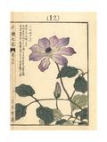 Kazaguruma or Japanese Windmill Flower, Clematis Patens Giclee Print by Bairei Kono