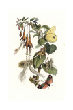Elves and Fairies Playing and Feasting on a Fuchsia Plant Giclee Print by Richard Doyle