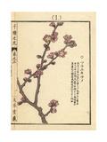Chinese Plum or Japanese Apricot, Prunus Mume Giclee Print by Bairei Kono
