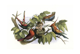 A Baby Elf in a Bird's Nest Surrounded by Angry Birds Giclee Print by Richard Doyle