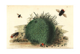 Red-Tailed Bumblebee, Bombus Lapidarius Giclee Print by Richard Nodder