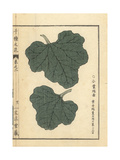 Makuwa Musk Melon Leaves, Cucumis Melo Var Makuwa Giclee Print by Bairei Kono