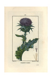 Milk Thistle, Silybum Marianum Giclee Print by Pierre Turpin