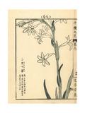 Resurrection Lily, Lycoris Squamigera Giclee Print by Bairei Kono
