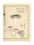 Shimejitake Mushrooms Giclee Print by Kan'en Iwasaki