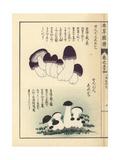 Zenbon Shimeji Mushrooms, Tricholoma Pes-Caprae Giclée-Druck von Kan'en Iwasaki