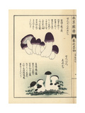 Zenbon Shimeji Mushrooms, Tricholoma Pes-Caprae Giclee Print by Kan'en Iwasaki