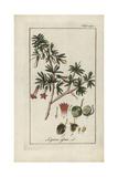 Boxthorn, Lycium Afrum Giclee Print