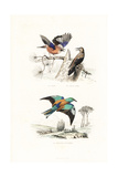Jay, Spotted Nutcracker and Roller Giclee Print by Edouard Travies