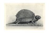 Edaphosaurus (Naosaurus) from Permian Strata of Texas Giclee Print by Charles R. Knight