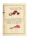 Benitake and Russula Fragilis Mushrooms Giclee Print by Kan'en Iwasaki