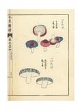 Benitake Mushroom Varieties Giclee Print by Kan'en Iwasaki