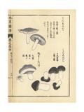Kuroshimeji and Nezumitake Mushrooms Giclee Print by Kan'en Iwasaki
