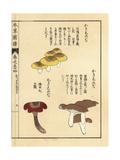 Kakishimeji Mushrooms Giclee Print by Kan'en Iwasaki