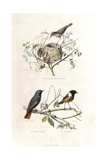 Garden Warbler, Redstart and European Stonechat Giclee Print by Edouard Travies