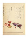 Akahatsudake and Shibahatsu Mushrooms Giclee Print by Kan'en Iwasaki