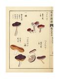 Benitake Varieties and Russula Fragilis Mushrooms Giclée-Druck von Kan'en Iwasaki