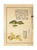 Kakishimeji and Kishimeji Mushroom, Tricholoma Equestre Giclee Print by Kan'en Iwasaki
