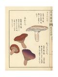 Kihatsudake, Murasakihatsu and Akahatsu Mushrooms Giclee Print by Kan'en Iwasaki