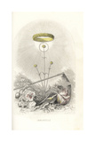 Emblematic Illustration of the Everlasting Flower Giclee Print by Jean Ignace Grandville