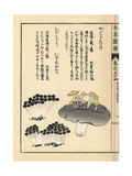 Yaguretake and Ibomiri Mushrooms Giclee Print by Kan'en Iwasaki