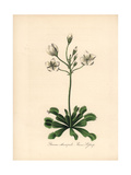 Venus Flytrap, Dionaea Muscipula Giclee Print by M.A. Burnett