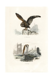Long-Eared Owl and Barn Owl Giclee Print by Edouard Travies