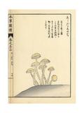 Ashitaka Shimeji Mushroom Giclee Print by Kan'en Iwasaki