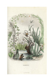 Narcissus Flower Fairy Staring at His Reflection Giclee Print by Jean Ignace Grandville