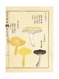 Kishimeji and Kintake Mushrooms Giclee Print by Kan'en Iwasaki