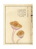Ashitaka Shimeji Mushroom Giclée-Druck von Kan'en Iwasaki