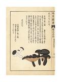 Shimejitake and Shimeji Mushrooms Giclee Print by Kan'en Iwasaki